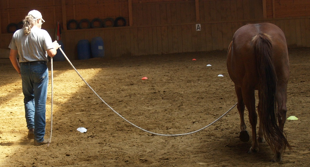 Freiheit in Grenzen für mitdenkende und entspannt mitarbeitende Pferde. Foto ist © Manfred Laib