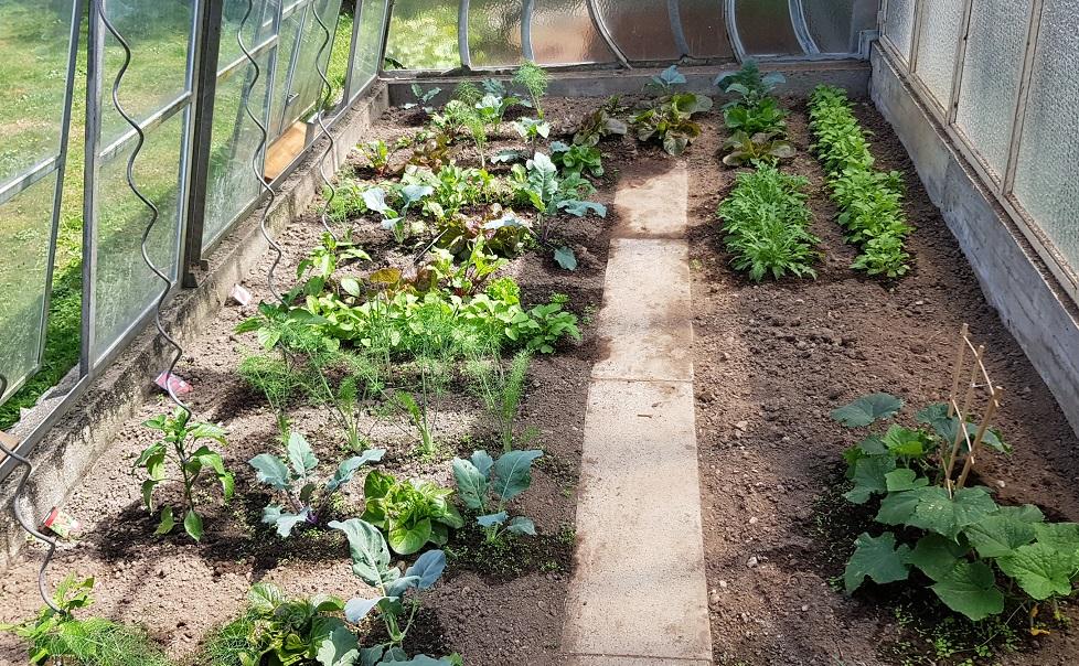in unserem Garten bauen wir Obst und Gemüse für uns an