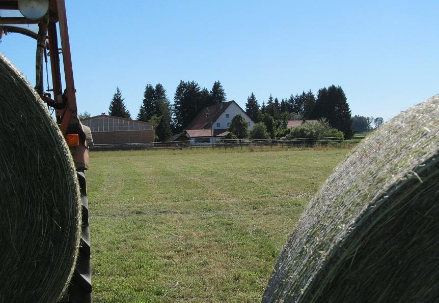 seit 1986 erzeugten wir Bio-Heu für unsere Pferde