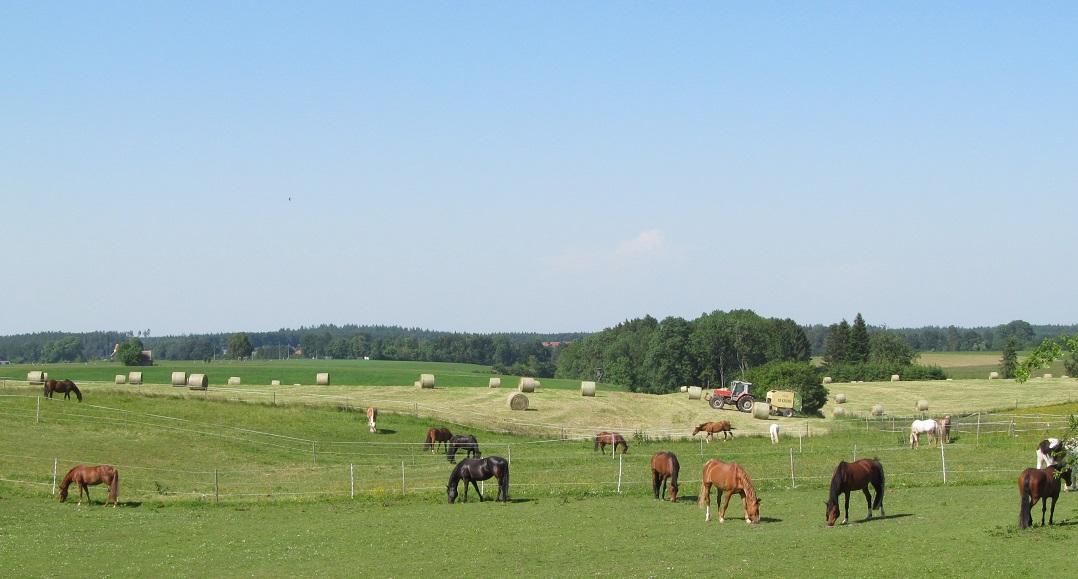 über 10 ha Land ermöglichten uns artgerechte Haltung und Selbstversorgung für die Pferde. Foto ist © Manfred Laib